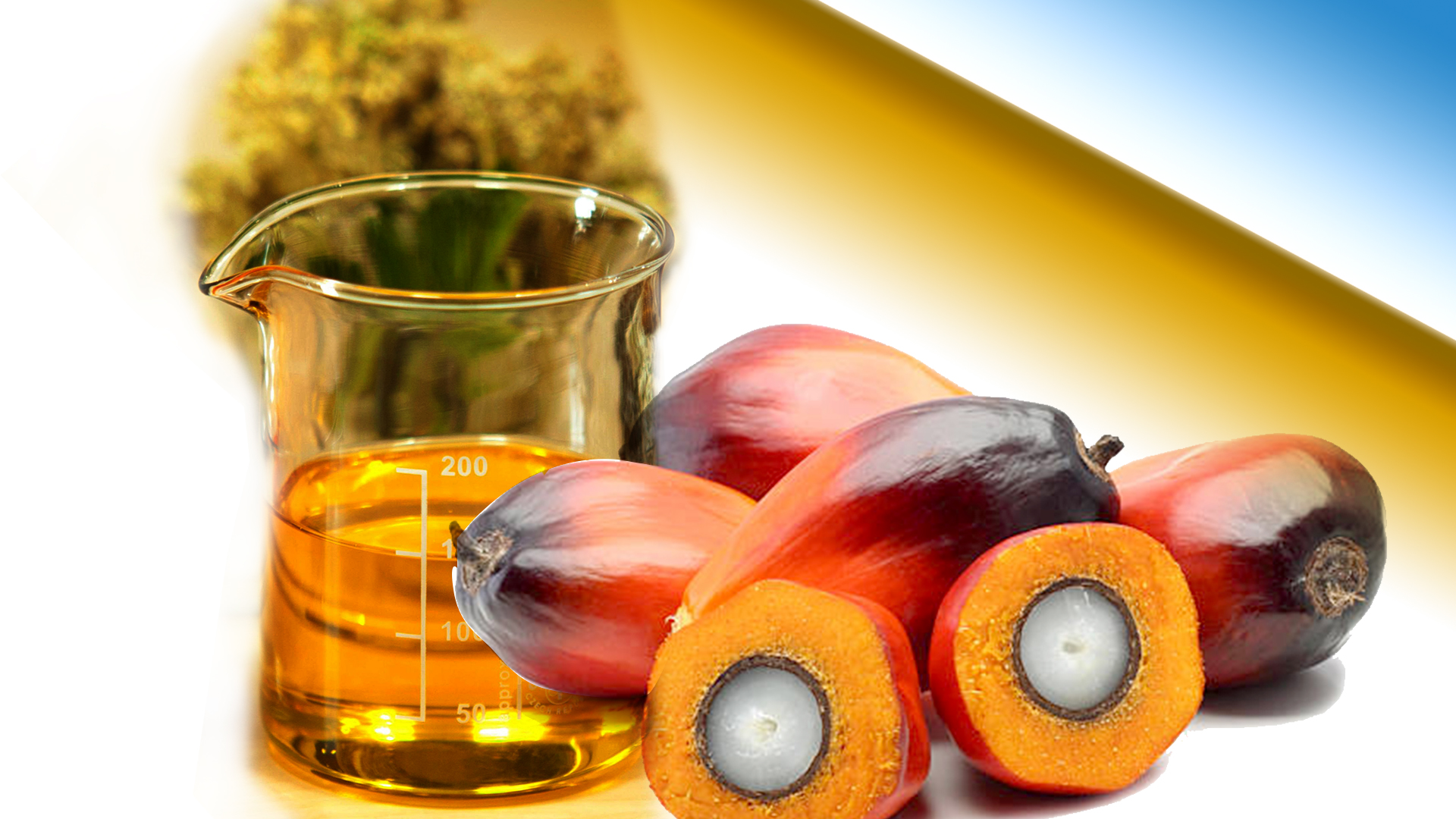 Malaysian Palm Oil Prices to Recover in 2019